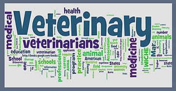 Comforting Pet Loss books for Veterinarians