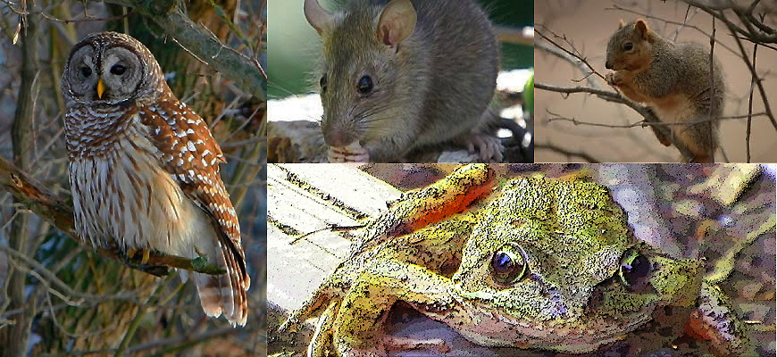 Owl, Frog, Rat and Squirrel—What the Creatures Taught Me (Part Two)