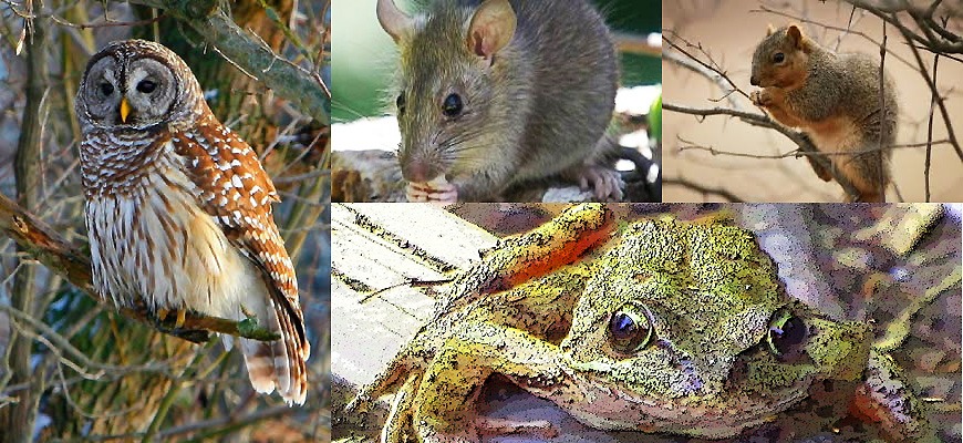 Owl, Frog, Rat and Squirrel— What the Creatures Taught Me
