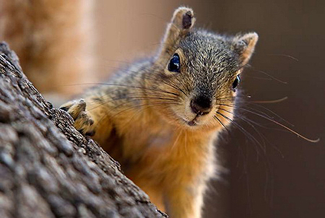 Squirrel cute 2